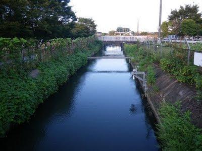 見沼代用水西縁