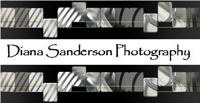 Diana Sanderson Photography