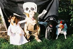 Some of the Pirate Doggy Crew!