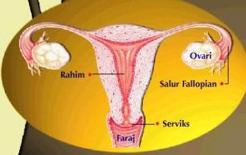 Mengenal Lebih Dekat Penyakit Kelamin Wanita