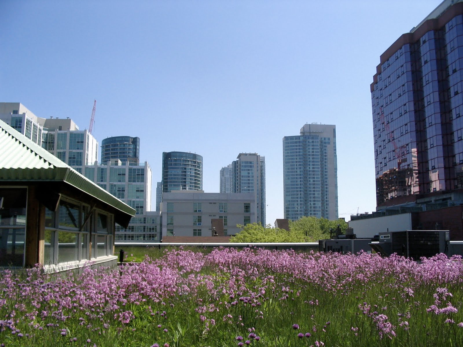 Melbourne curious ch2 39 s rooftop garden success or failure - Build green roof nature home ...