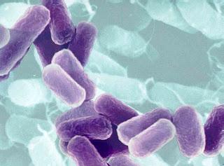 Informações Bactéria KPC