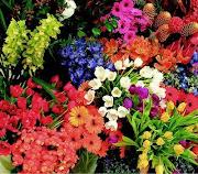Flores e o Coração - Viajantes na Linha do Tempo