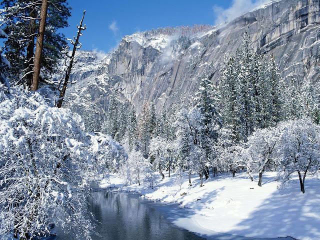 Winter wallpaper snow forest