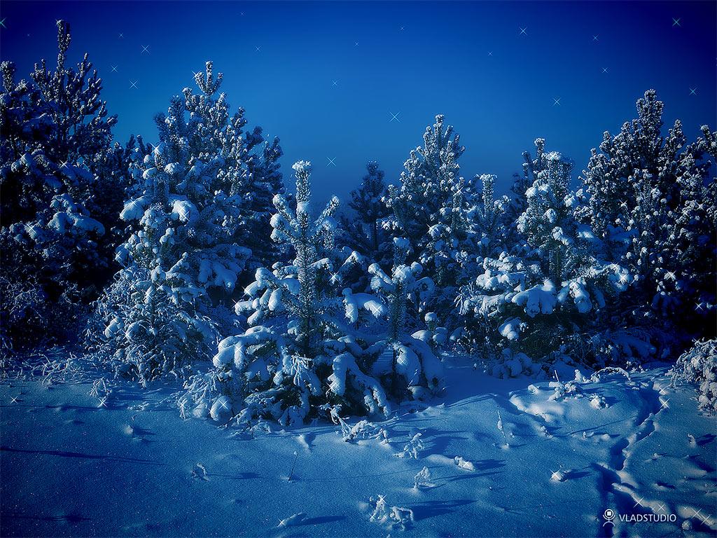 http://4.bp.blogspot.com/_uTGKd6u5pJ4/TQIAd2rKlyI/AAAAAAAAAHs/RO5Xs3XwlN0/s1600/Siberian-winter-wallpaper-vladstudio.jpg