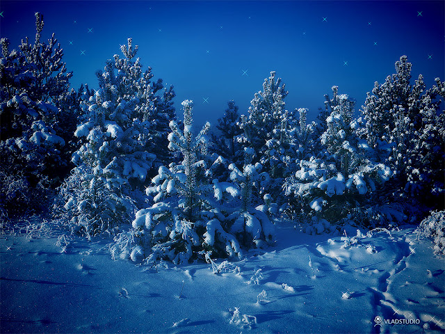 Siberian winter wallpaper vladstudio