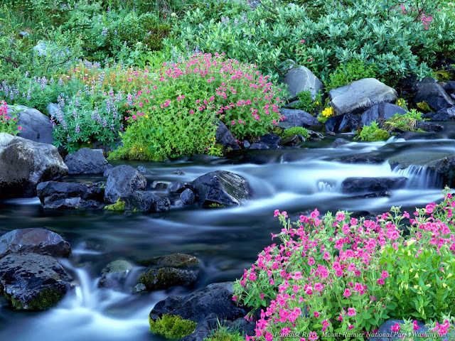 Nature wallpaper flower in the rocky river