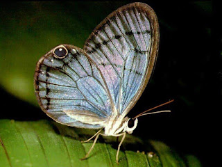 Gambar kupu-kupu lucu