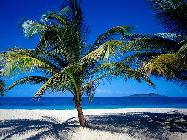 St. croix us virgin islands nature wallpaper