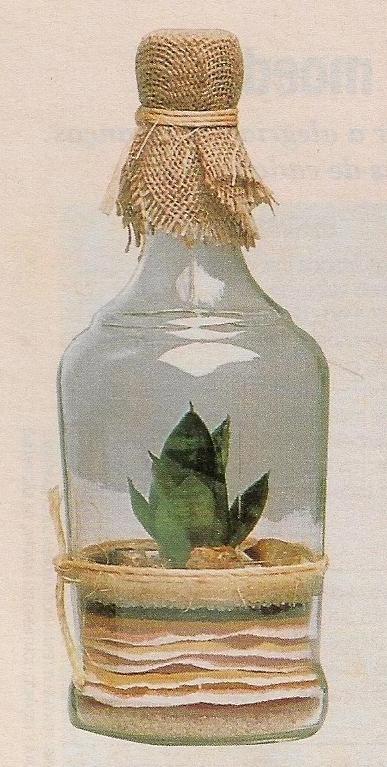 mini jardim jornal hoje : mini jardim jornal hoje:Terrários são pequenos jardins cultivados dentro de vidros fechados