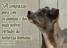Respeite os animais