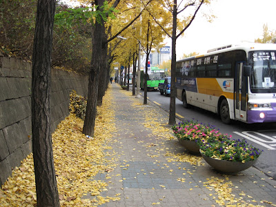 Seoul sidewalk covered in ginko leaves, 11-15-08