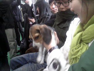 puppy on subway train, genuine chick magnet