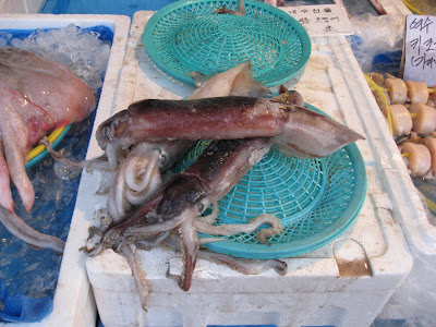 raw squid for sale