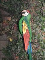 Parrot Avatar