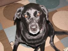 Kahlua  (aka Lulu)