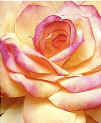 Flor de Viernes
