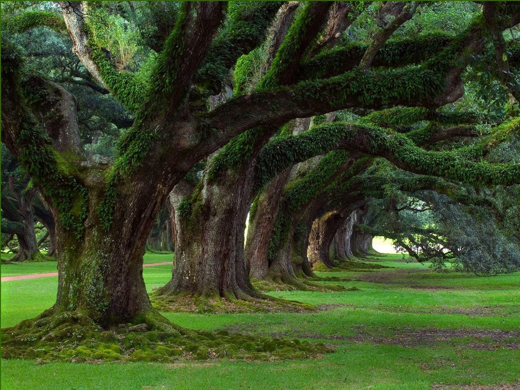 http://4.bp.blogspot.com/_uXdBqZqYJ2E/TFU4P945MlI/AAAAAAAAKrk/yGOTa7wvaZ4/s1600/natural_tree_1024x768.jpg