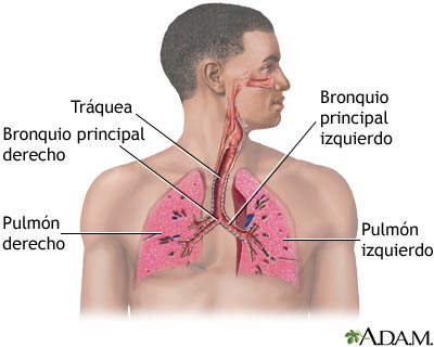 Los sistemas del cuerpo humano los sistemas del cuerpo humano - Humidificador que es ...