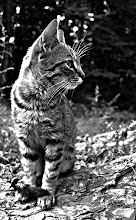 Click meow