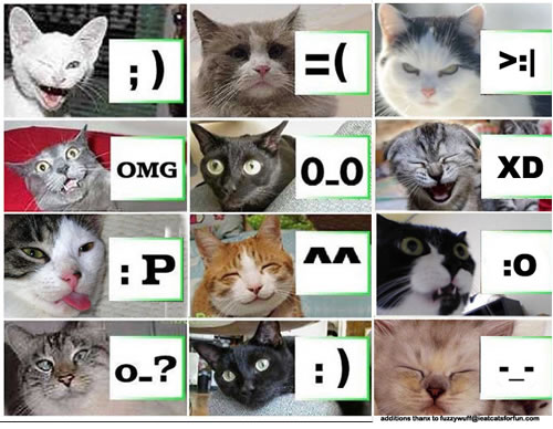 [lolcat-emoticon.jpg]