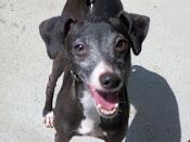 max adopted may 2010