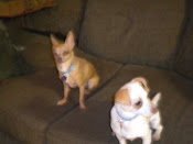 Cinco & Squirt have been adopted!