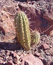 Flora del sitio arqueológico