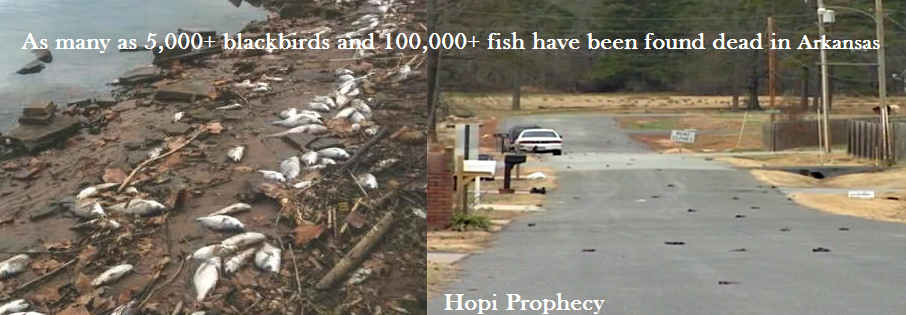 Arkansas birds falling from the sky fish dying hopi prophecy:a great