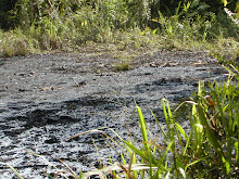 Chevron&#39;s Ecuadorian Toxic Waste Pits
