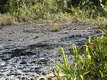 Chevron's Ecuadorian Toxic Waste Pits