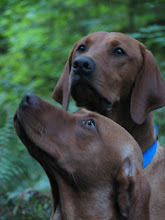 Adult Siblings of Red Pups