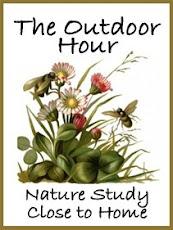 Outdoor Hour Challenge