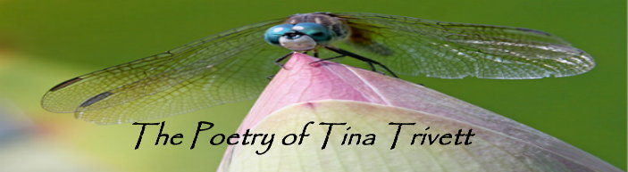 Poetry of Tina Trivett