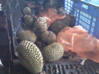 Durians galore!