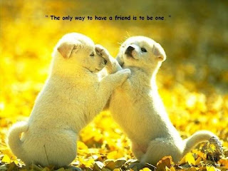friendship puppy love card