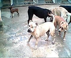Canil: Socialização dos cães
