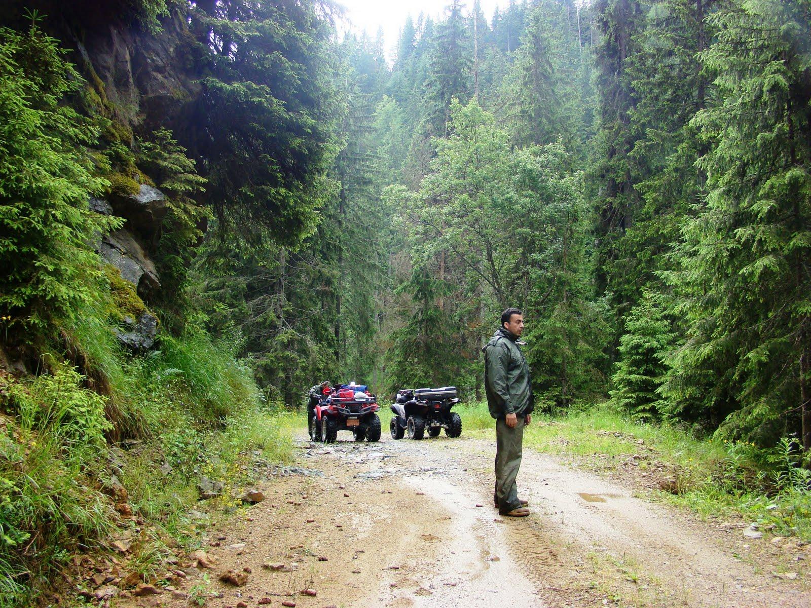 Δάσος ελατιάς-δάσος φρακτού