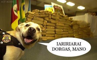 cão drogado
