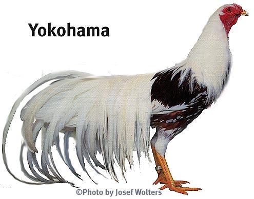 [poule+yokohama]