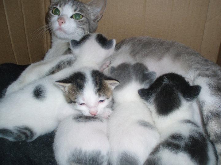 Loving pets colombia gata y gatitos para adopcion for - Gatitos de un mes ...