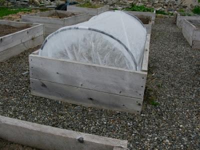 Should I Use Tucson Raised Garden Beds