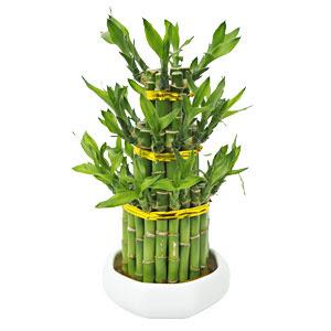 Como cuidar de plantas e flores no inverno