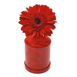 flores dia dos professores
