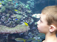 Corbin at the coral reef exhibit