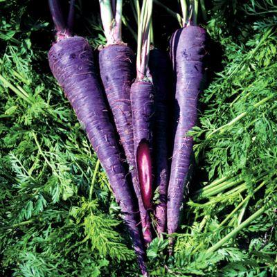 Purple carrots wiki &a...