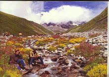 Rare Himalayan flowers