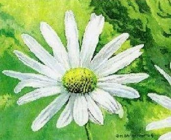 Sunlit Daisy -- Sold, available as print.