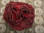 Jumbo Rose