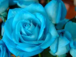 Flores para Minha Mai Yemanja